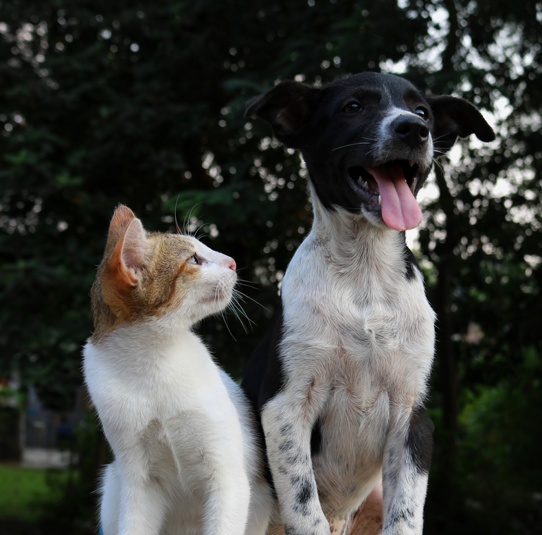 Eco-Friendly Pet Parenting: 5 Tips To Responsible Pet Ownership