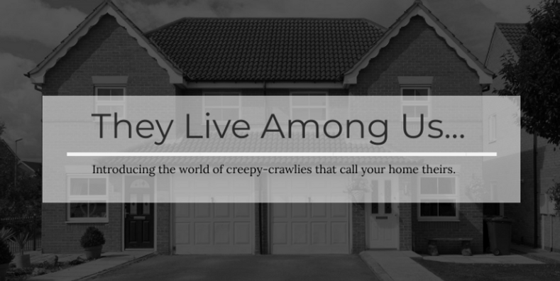 Introducing The Creepy-Crawlies That Live In Your Home & Make Your Pets Sick — And How To Stop Them