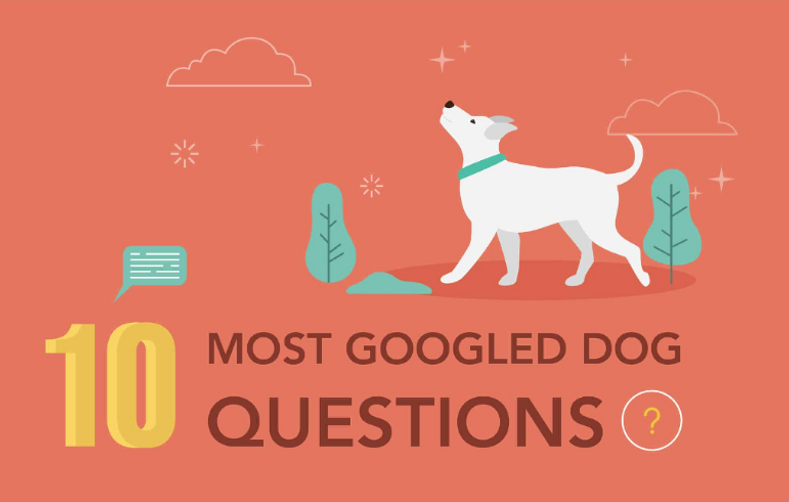 10 Most Googled Dog Questions of 2019