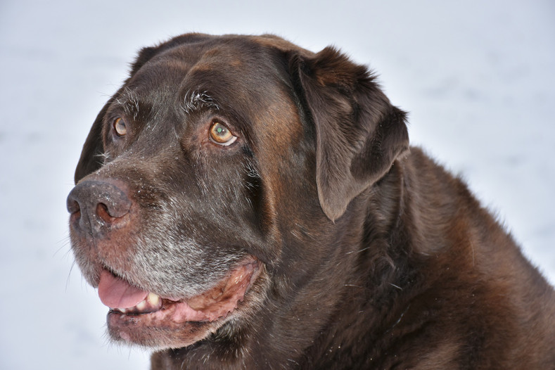 CBD Oil for Senior Dogs: Is It Helpful?