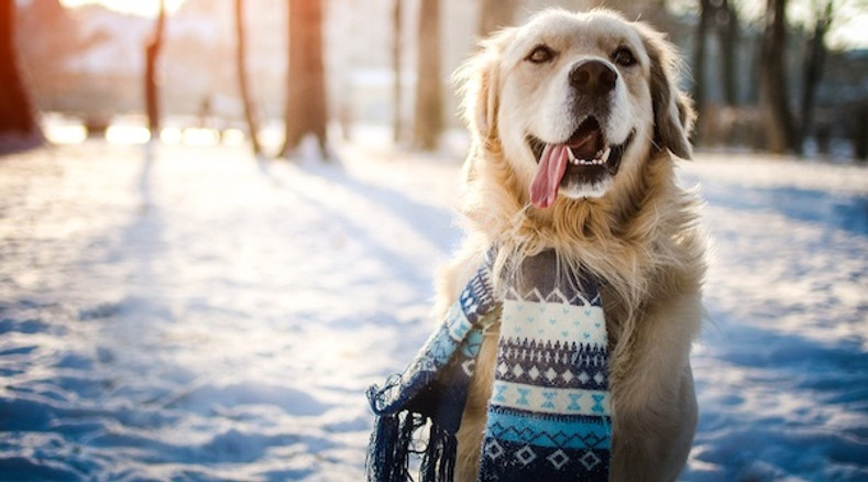 Safety tips for you and your pet in the SCI (cold, snow, and ice)!