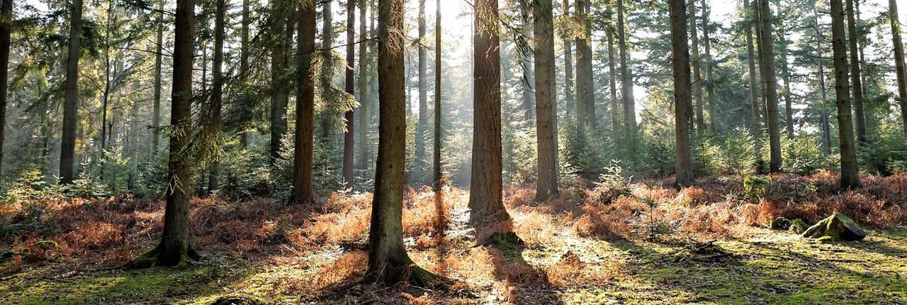 Superior Appalachian Hardwoods