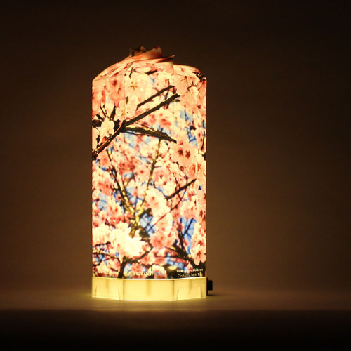 A Cherry Blossom scene is captured on this lamp. It's a great Japanese themed lamp for anyone desiring to go or have been to Japan.