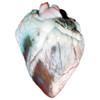 Sheep Heart Specimen for Dissection