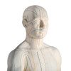 Male Acupuncture Points Anatomy Model head and neck view