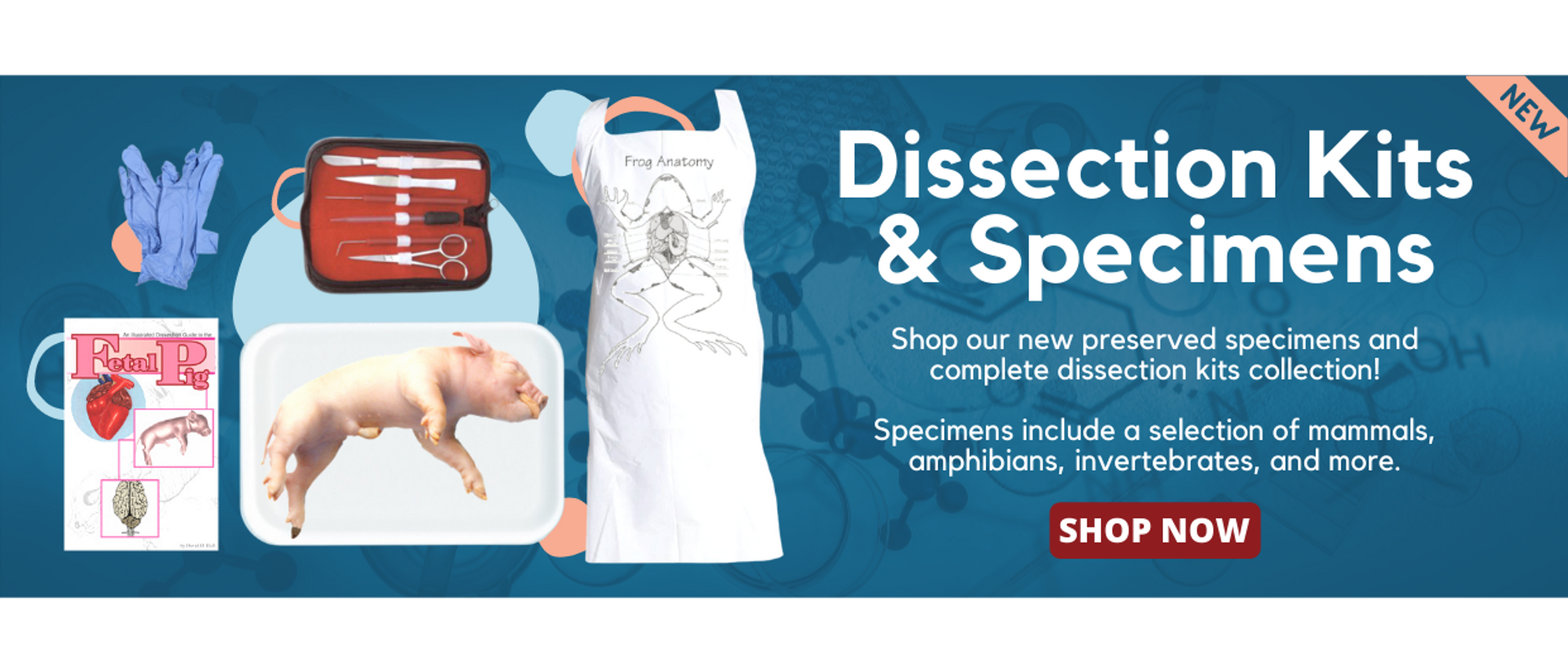 Anatomy Warehouse Dissection Kits and Specimens selection of mammas, amphibians, invertebrates, and more.