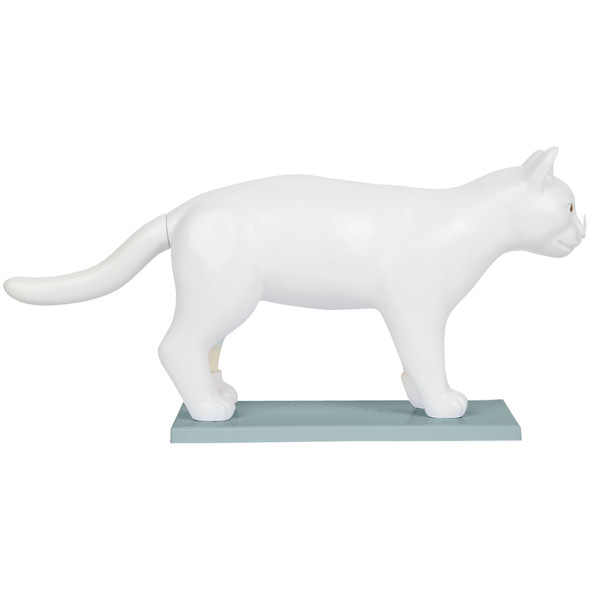 Anatomy Lab Domestic Feline Felis catus Anatomy Model 1