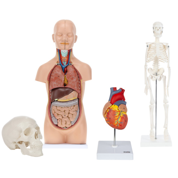 Introductory Anatomy Kit