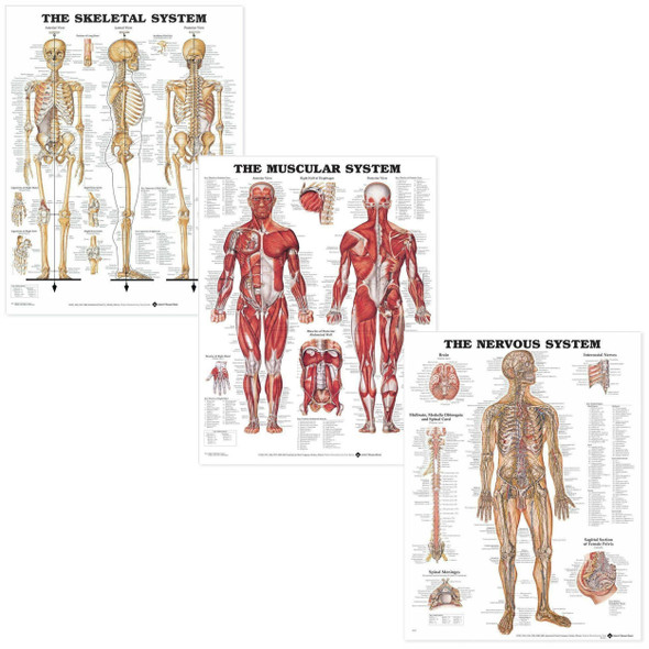 Introductory Anatomy Chart Set