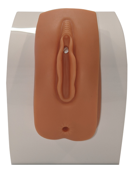 Anatomy Lab Female Urinary Catheterization and Enema Trainer with Stand