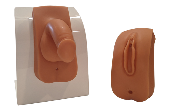 Anatomy Lab Dual Sex Urinary Catheterization and Enema Trainer with Stand