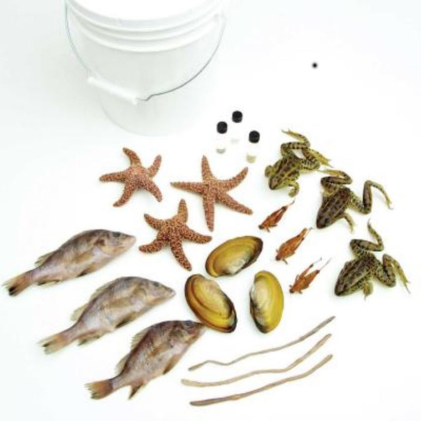 """Anatomy Lab Class Pack of 9 Specimens, Pail of 10, Non-Mammal Preserved Specimens include Sponges, hydra, planaria, 7""""-9"""" earthworms, 3""""-4"""" clams, 5""""-6"""" starfish, 3+"""" grasshoppers, 5""""-7"""" perch & 3"""" grass frogs"""