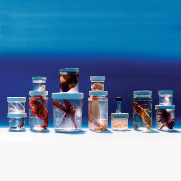 Anatomy Lab Comparative Invertebrate Set of 13 Preserved Specimens for Dissection. Includes Sponge, Aurelia, Sheep Fluke (Parasite), Terebratella, Ascaris, Starfish, Earthworm, Clam, Squid, Crayfish, Tarantula, Grasshopper, Sea Squirt.