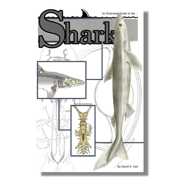 Anatomy Lab Shark Dissection Guide
