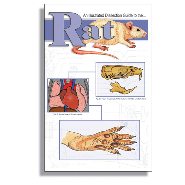 Anatomy Lab Rat Dissection Guide
