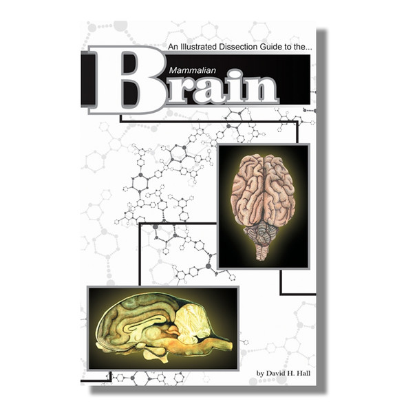 Anatomy Lab Mammal Brain Dissection Guide