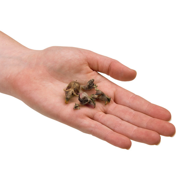 Individual Large-Sized Owl Pellet in Person's Hand 1