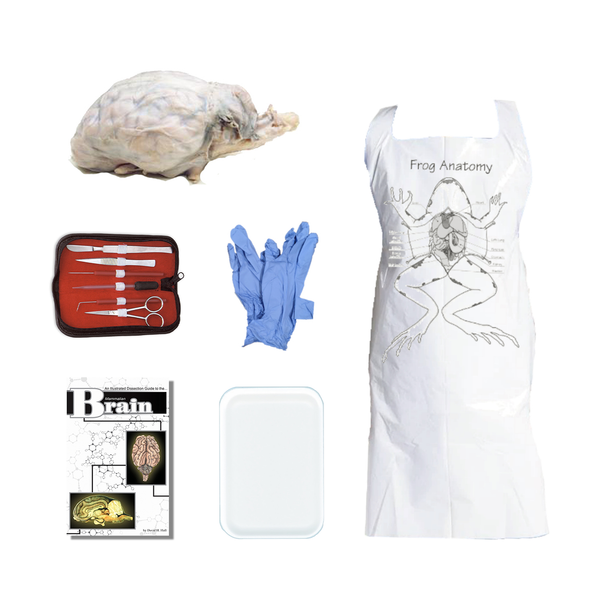 Sheep Brain Dissection Kit
