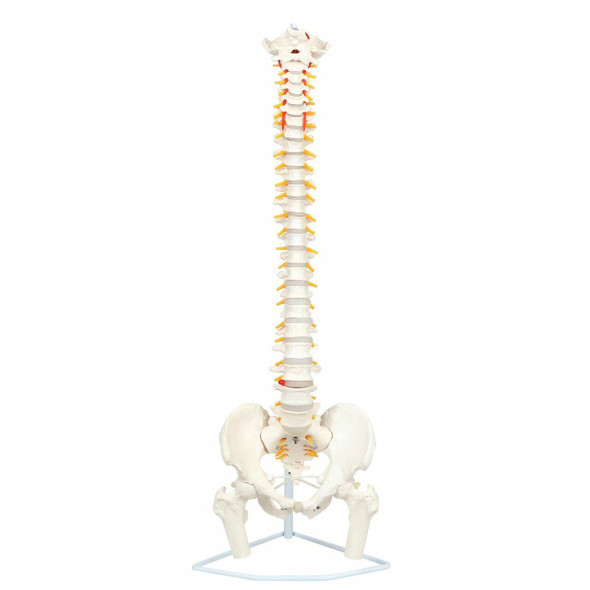 Axis Scientific Premium Flexible Vertebral Column