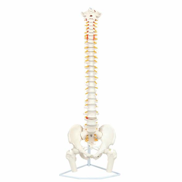 Axis Scientific Premium Flexible Vertebral Column
