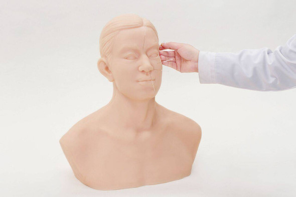 Anatomy Lab Acupuncture Training Head