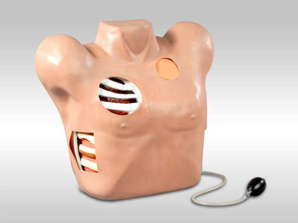 Anatomy Lab Chest Drain and Needle Decompression Trainer