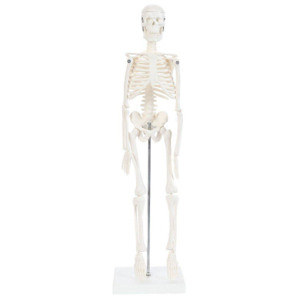 Anatomy Lab Essential Micro Desktop Skeleton