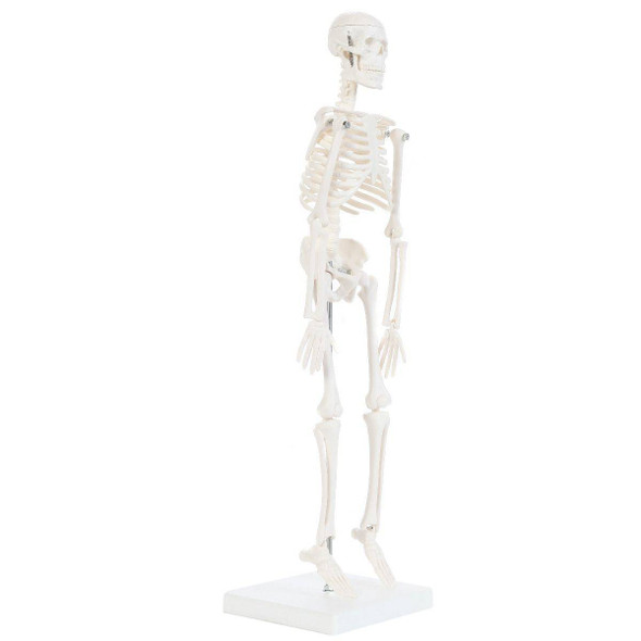 Anatomy Lab Essential Micro Desktop Skeleton 1