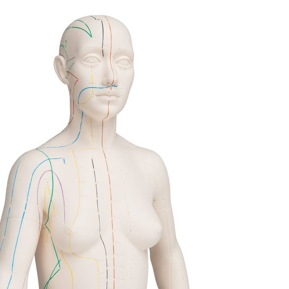 Acupuncture Model, Female 1