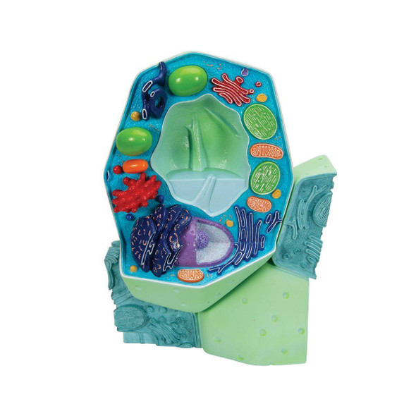 Magnified Plant Cell
