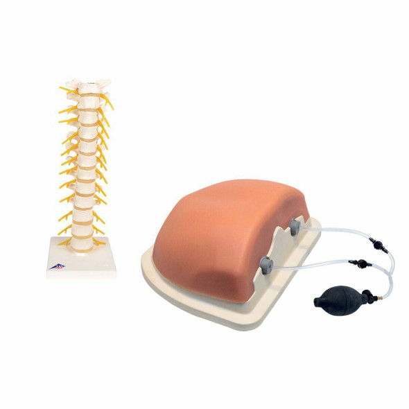 Thoracic Spinal Injection Trainer Kit