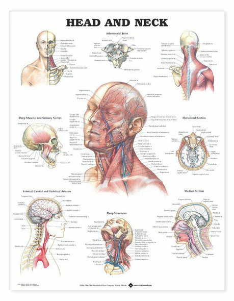 Head and Neck Laminated Anatomical Chart