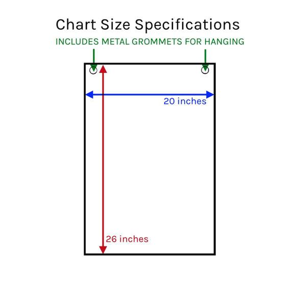 Urinary Tract Laminated Anatomical Chart 1