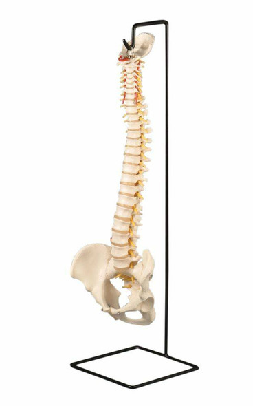 Spine Stand