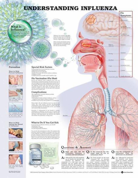 Understanding Influenza Laminated Anatomical Chart
