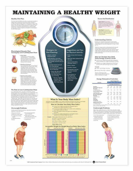 Maintaining A Healthy Weight Laminated Anatomical Chart
