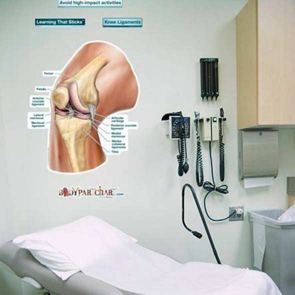 Knee Ligaments Labeled Anatomy Dry-Erase Sticky Wall Chart - 27 in x 40 in