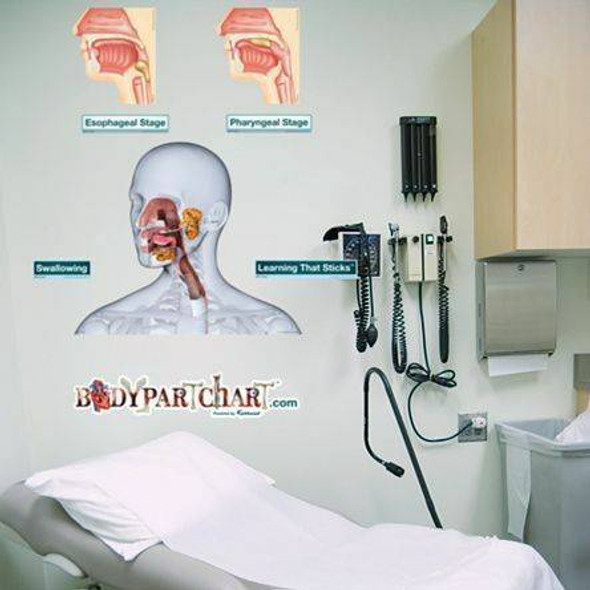 Anatomy of the Mouth and Throat Dry-Erase Sticky Wall Chart - 27 in x 40 in