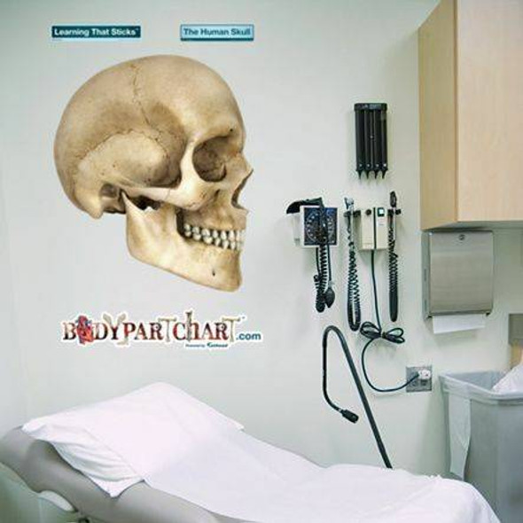 Skull Anatomy Dry-Erase Sticky Wall Chart - 27 in x 40 in