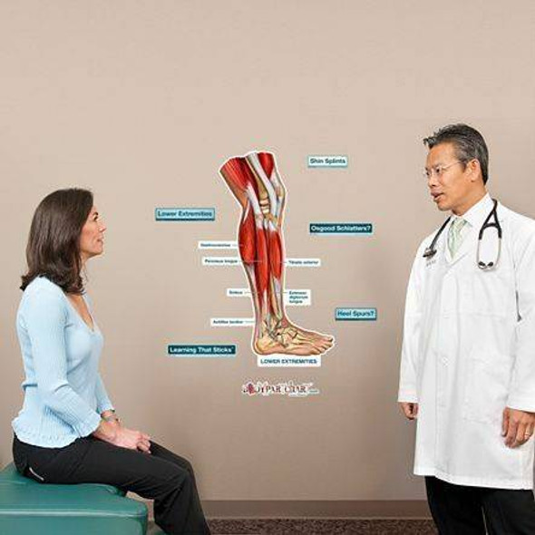 Lower Extremity Labeled Anatomy Dry-Erase Sticky Wall Chart - 24 in x 30 in