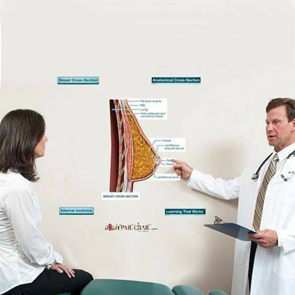 Cross Section of the Breast Labeled Anatomy Dry-Erase Sticky Wall Chart - 27 in x 40 in