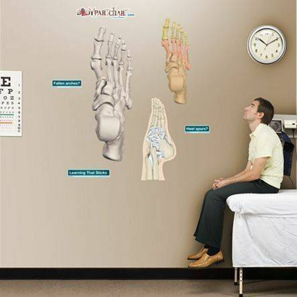 Ankle and Foot Anatomy Dry-Erase Sticky Wall Chart - 27 in x 40 in