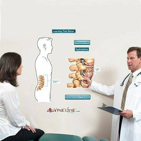 Compression Fracture Labeled Anatomy Dry-Erase Sticky Wall Chart - 27 in x 40 in