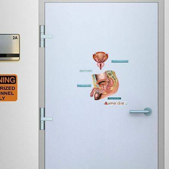 Male Reproductive System Anatomy Dry-Erase Sticky Wall Chart - 27 in x 40 in