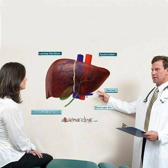 Liver Anatomy Dry-Erase Sticky Wall Chart - 27 in x 40 in