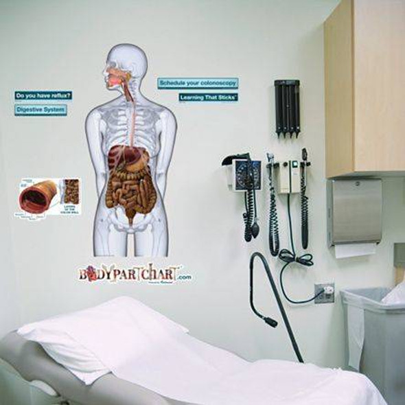 Digestive System Anatomy Dry-Erase Sticky Wall Chart - 27 in x 40 in