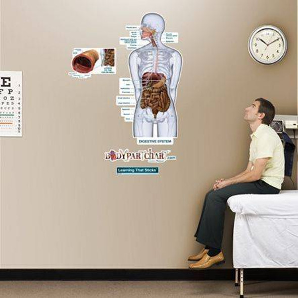 Digestive System Labeled Anatomy Dry-Erase Sticky Wall Chart - 27 in x 40 in