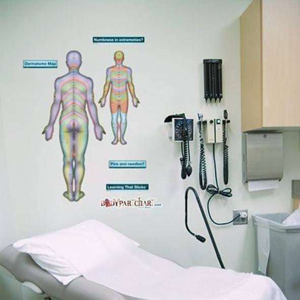 Posterior Dermatomes Anatomy Dry-Erase Sticky Wall Chart - 27 in x 40 in