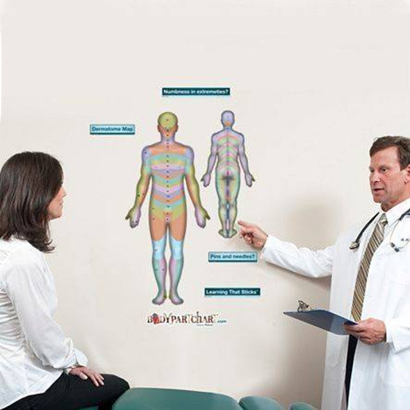Anterior Dermatomes Anatomy Dry-Erase Sticky Wall Chart - 27 in x 40 in