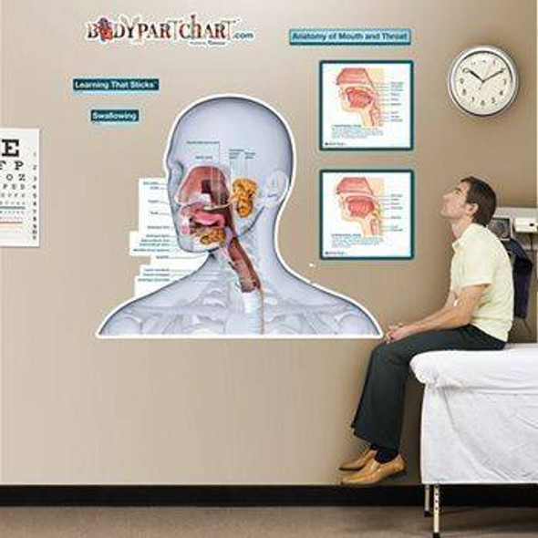 Anatomy of the Mouth and Throat Labeled Dry-Erase Sticky Wall Chart - 54 in x 40 in